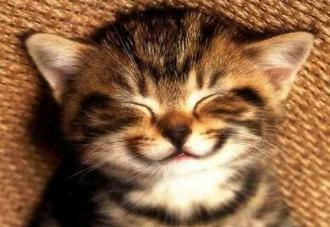 картинки утро начинается с улыбки